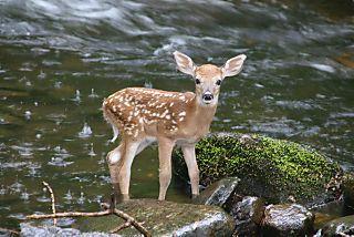 Bambi#3